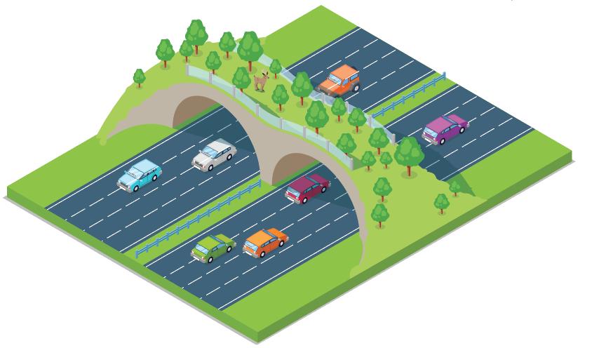 Highways and wildlife illustration
