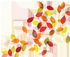 Autumn falling leaves.